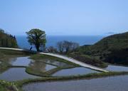 朝の岩首、天空棚田からみるさわやかな景色