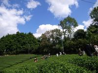 京都おぶぶ茶苑2009年秋