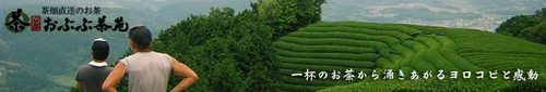 京都おぶぶ茶苑 茶畑の丘陵地