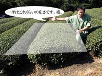 一坪の茶畑の目安