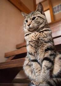 弱虫だけどちび猫を面倒みるTommyくん