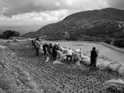 稲刈り終了し束ねる作業開始